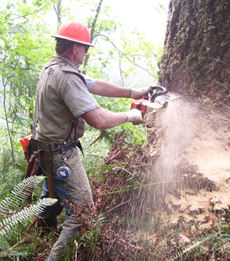 Professional Chain Saw in Action