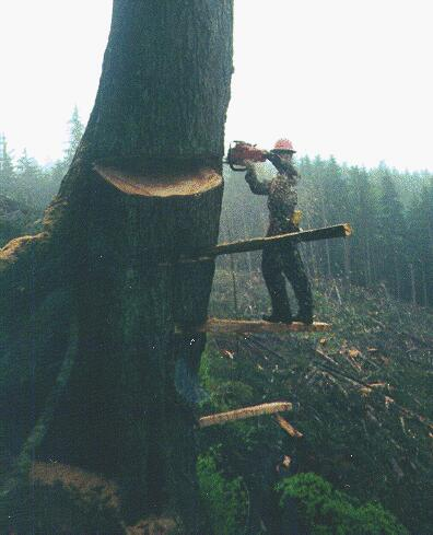Paul Custis Cutting Old Growth