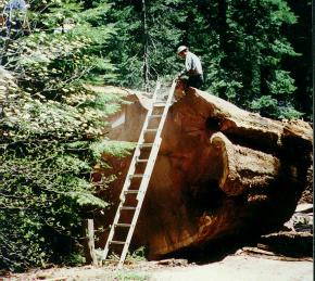 Climbing a Ladder to the Top of the Log