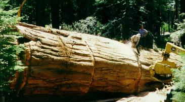 Cutting the Log Into Sections